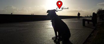 Lokalizacja GPS – w trosce o Twoje zwierzęta